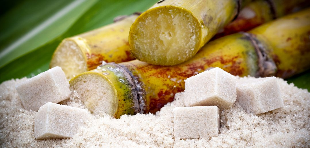 Non-GMO sugar cane