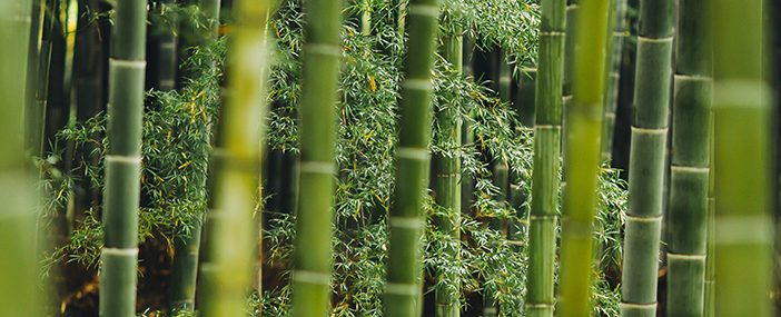 Healthy clothing doesn't come from bamboo