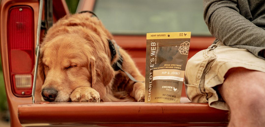 Charlotte's Web CBD for Dogs