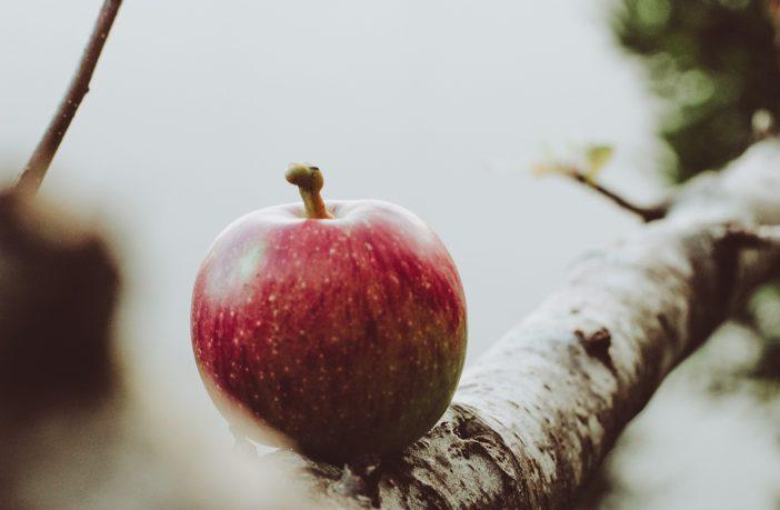Apple on a local farm