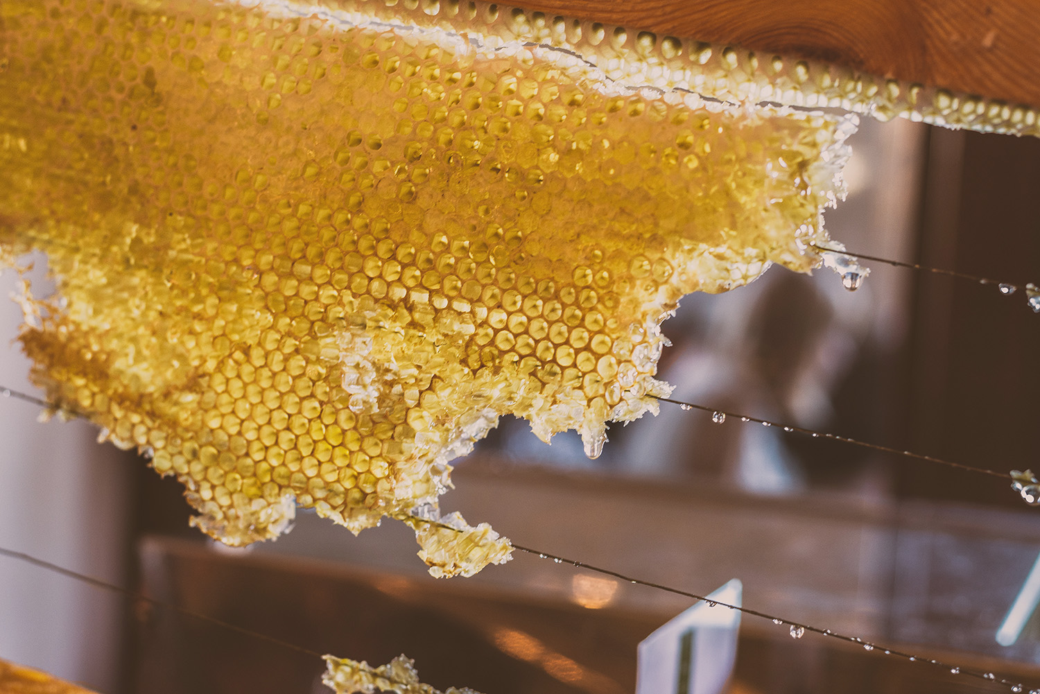 What is Ethical Honey and How Can I Find It? | Greenopedia