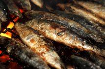 Farmed fish vs. Wild fish