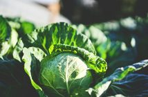 Fermented Foods and Probiotics