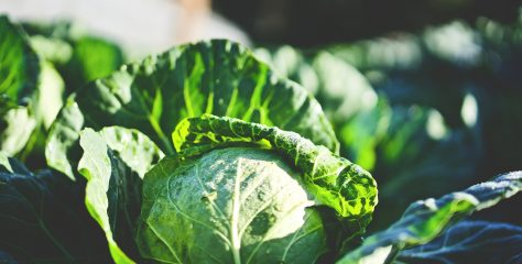 Fermented Foods and Probiotic Supplements For Healthier Skin, Better Poops, And A Stronger Immune System