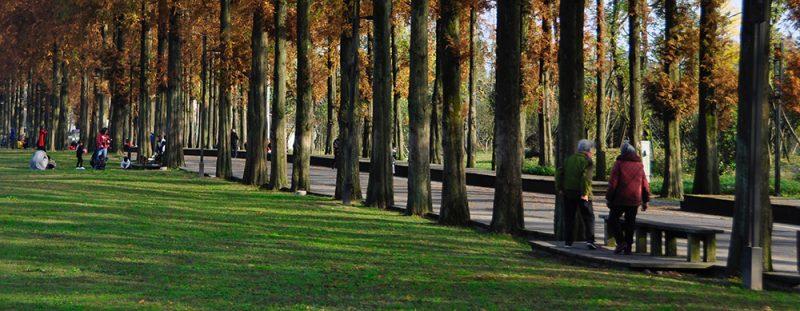 Gut biome benefits - walking outdoors