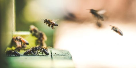 What's Going On With Our Bees and How Can Our Choices Help?