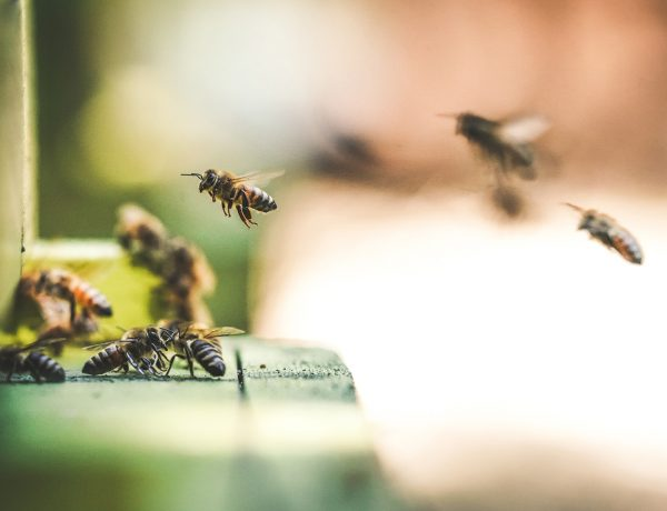 What's Killing Our Bees and How Can Our Choices Help?
