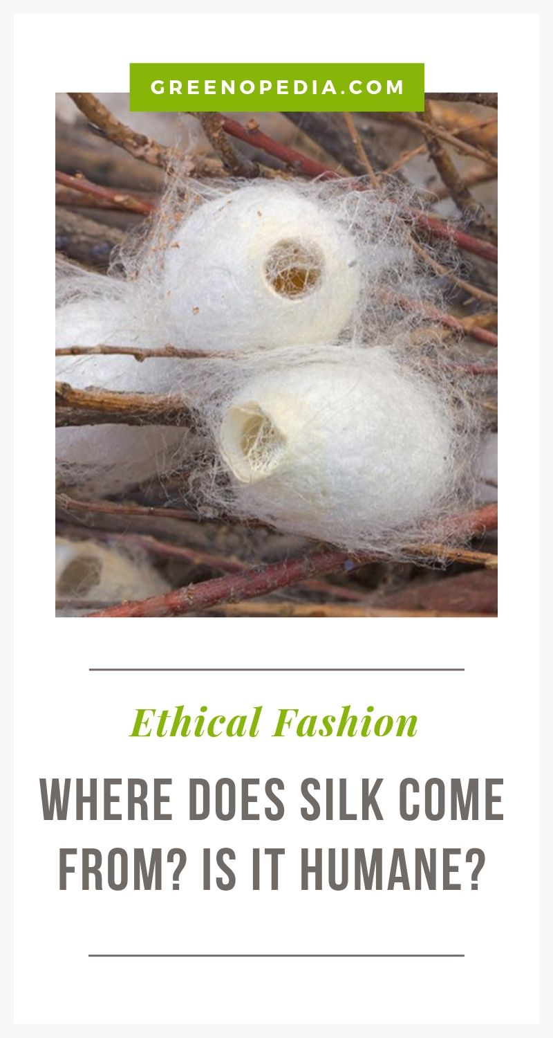 How is Silk Made? And is it Humane? | Silk is harvested from the cocoon of the silkworm. The process isn't just fascinating, it also determines whether the resulting silk is humane... as well as how the silk ultimately feels and wears. | Greenopedia #ahimsapeacesilk #humanesilk via @greenopedia via @greenopedia