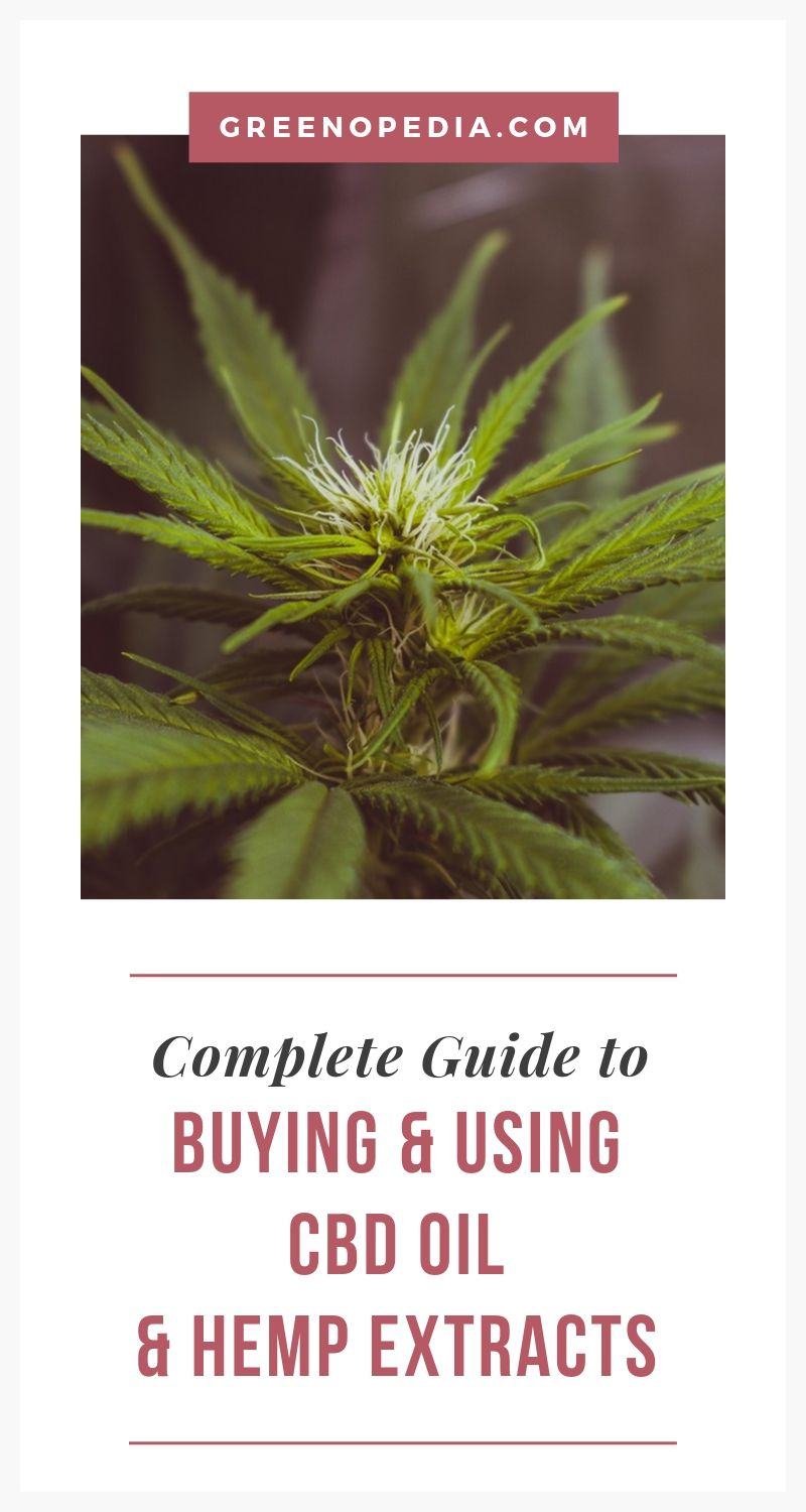 The Ultimate Guide for Buying and Using CBD   How is CBD different from THC? How much should I take? Do trendy CBD-infused products offer any benefit? How do cannabinoids benefit my body and mind?   Greenopedia #CBD via @greenopedia