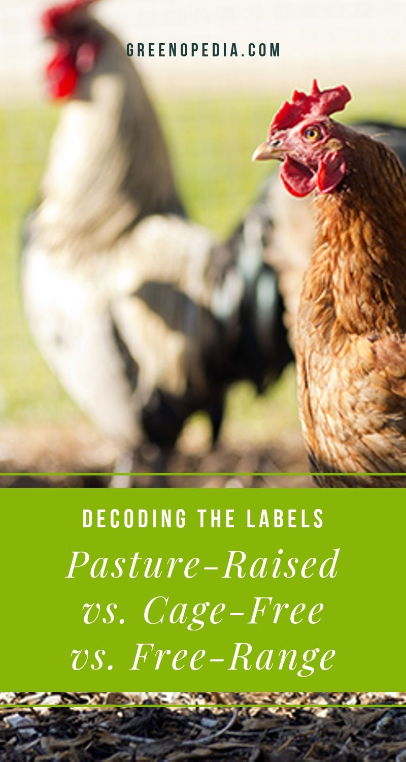 Cage Free, Free Range, Pasture Raised... Here's What the Labels Mean for Your Health and the Animal's. | Cage-free eggs, grass-fed beef, pasture-raised chickens, organic pork, certified humane... what do all these labels mean and which should you choose? | Greenopedia #cagefreevsfreerange #pastureraised #certifiedhumane #ethicalfood via @greenopedia