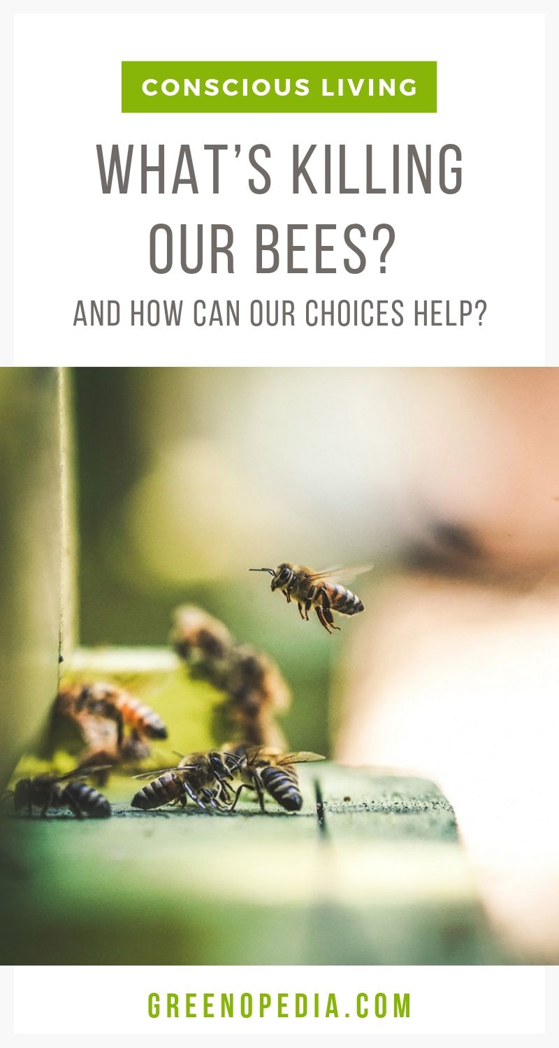 What's Killing Our Bees and How Can Our Choices Help? | There are a surprising number of ways we can support a healthy bee population. Let's see what's killing our bees, so we know how our efforts will help. | Greenopedia #KillingOurBees #What'skillingthebees #ethicalhoney #ethicalbeekeeping via @greenopedia