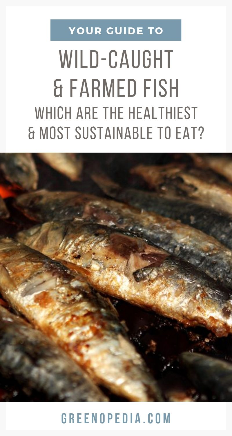 Wild-Caught vs. Farmed Fish: Which are the Healthiest and Most Sustainable Fish to Eat? | Both wild-caught and farmed fish have their challenges -- and their upsides. Here's how to choose the healthiest and most sustainable fish to eat. | Greenopedia #sustainablefish #healthiestfish via @greenopedia