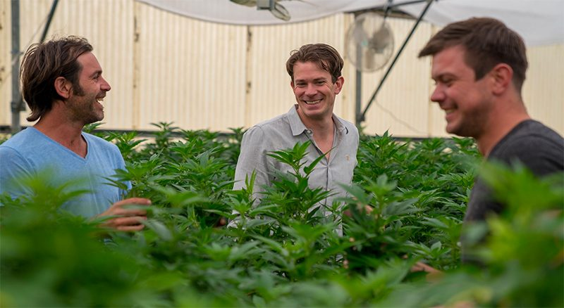 The Stanley Brothers Growing Hemp
