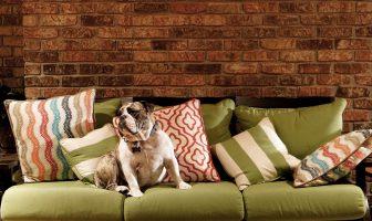 Furniture toxins