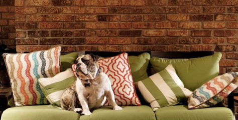 You Expect to Find Change in the Sofa, Not Toxins